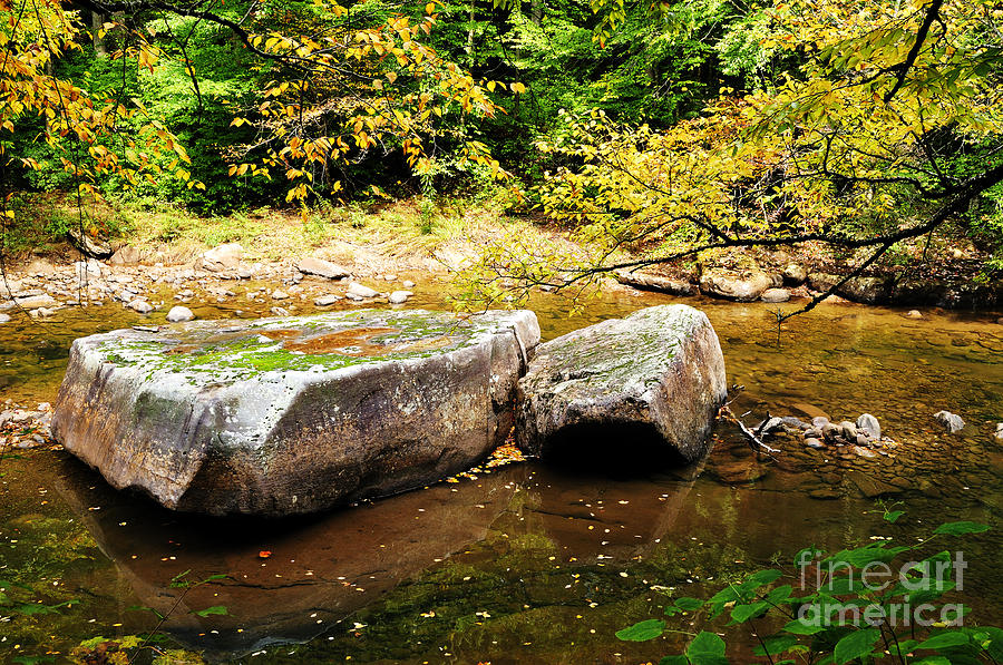 Williams River Photograph - Fall Along Williams River by Thomas R Fletcher