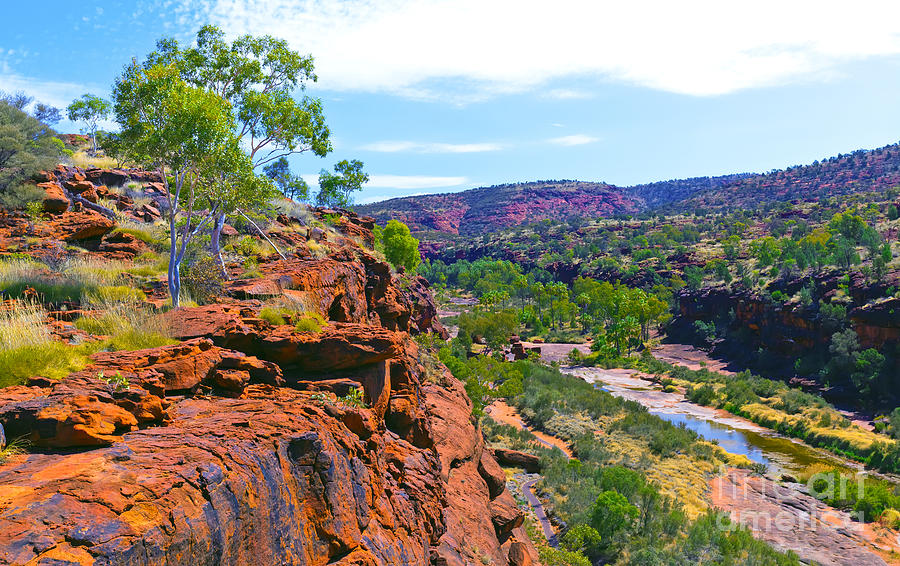 Palm Valley Central Australia Photograph