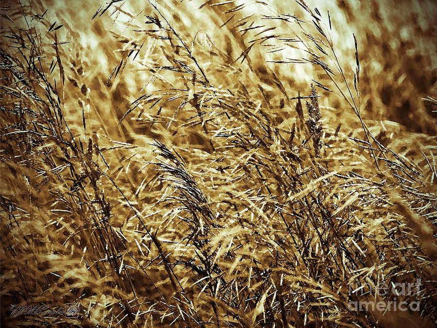 Brome Grass In The Hay Field Painting