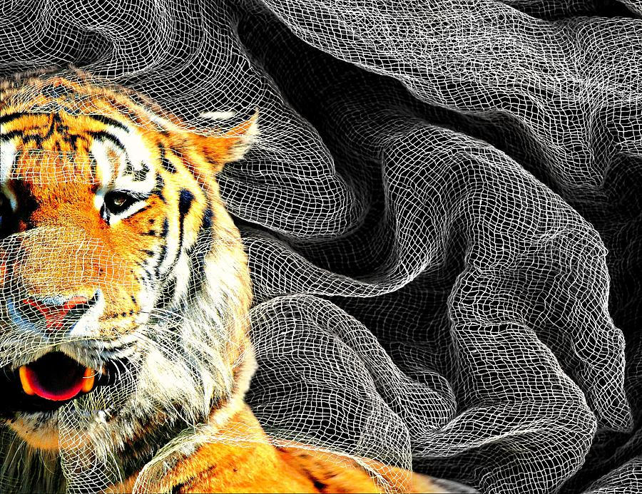 Big Cat Photograph - Capture by Diana Angstadt
