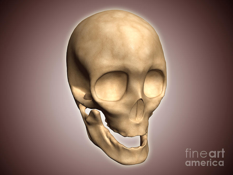 Conceptual Image Of Human Skull Digital Art