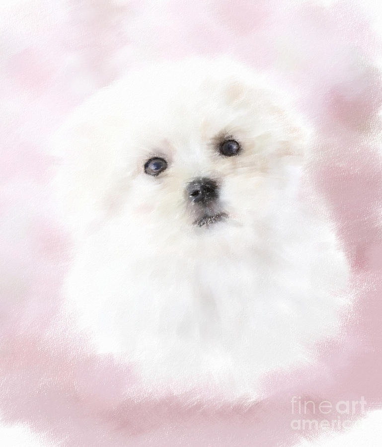 Cute Maltese Pastel  - Cute Maltese Fine Art Print