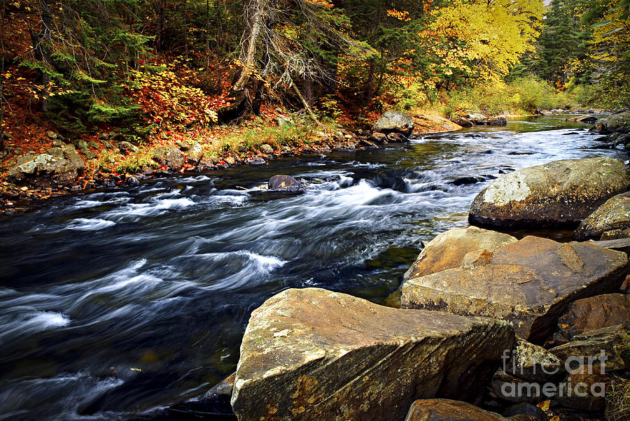 Forest River In The Fall Photograph  - Forest River In The Fall Fine Art Print