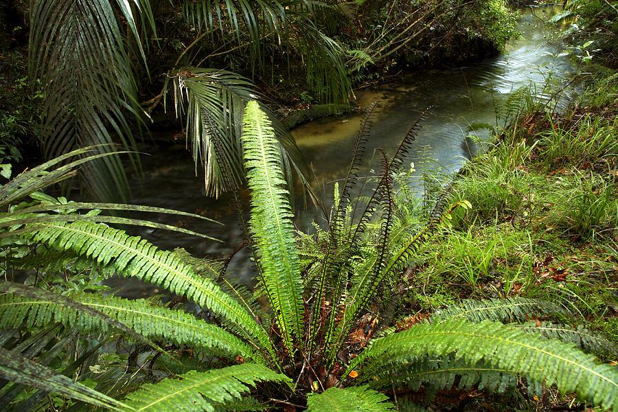 Jungle Stream Photograph