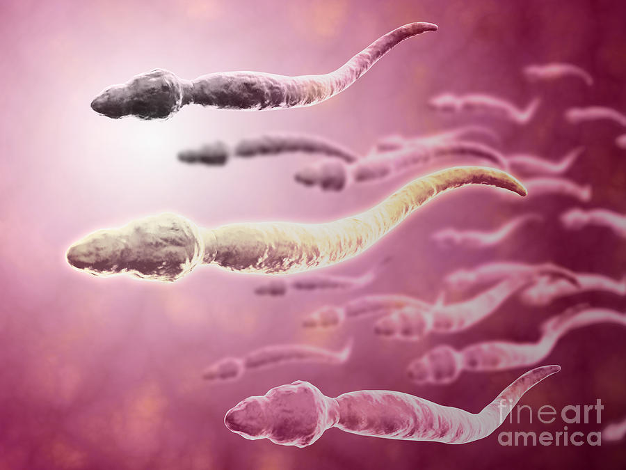 Microscopic View Of Sperm Traveling Digital Art