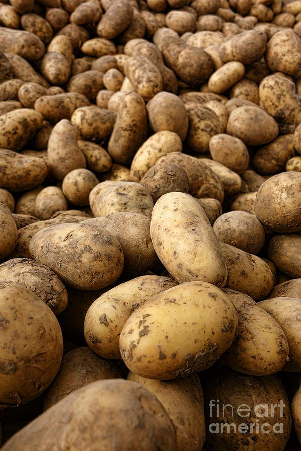 Potatoes Photograph