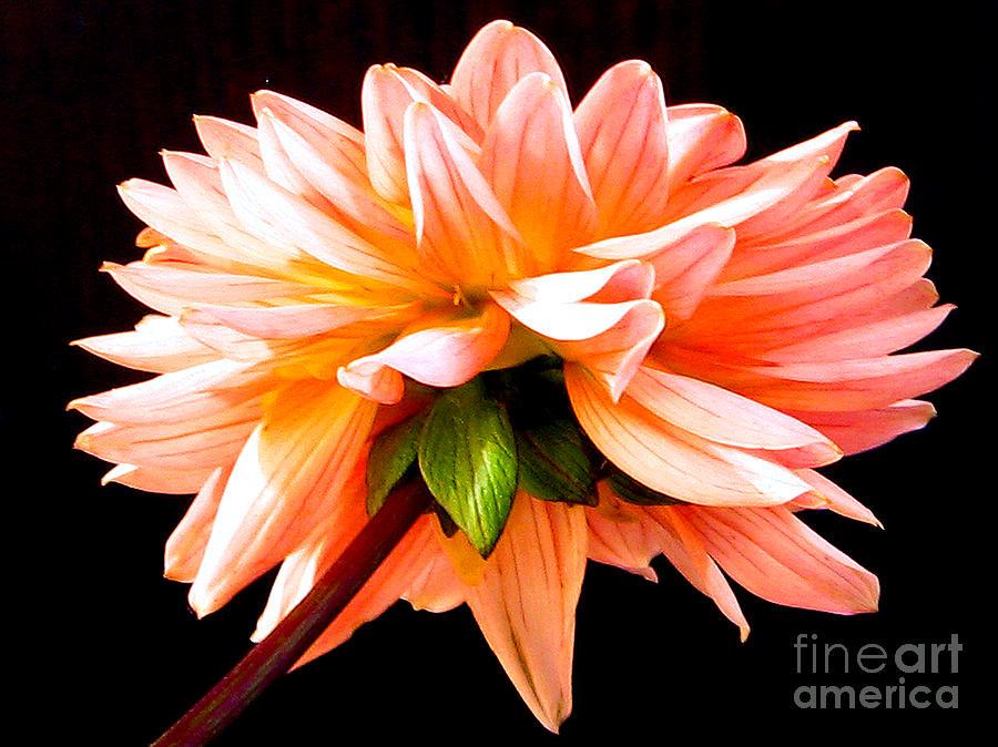 Summer Flower Photograph