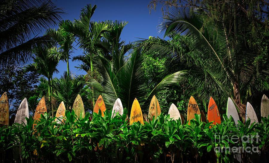 Hawaii Photograph - Surf Board Fence Maui Hawaii by Edward Fielding