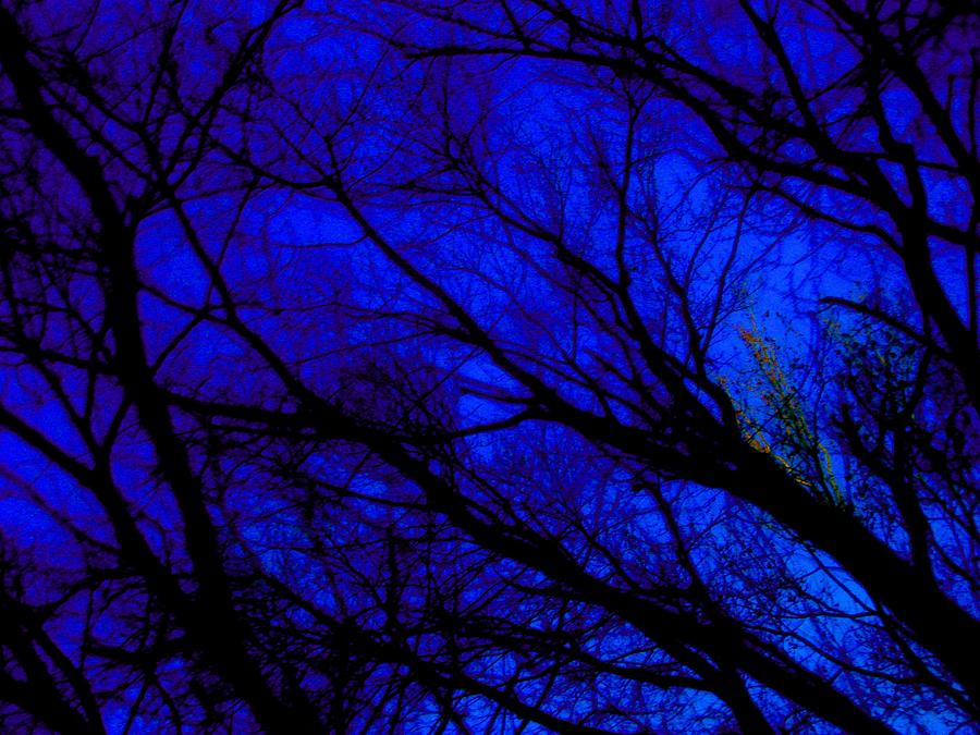Tree And Sky Photograph  - Tree And Sky Fine Art Print