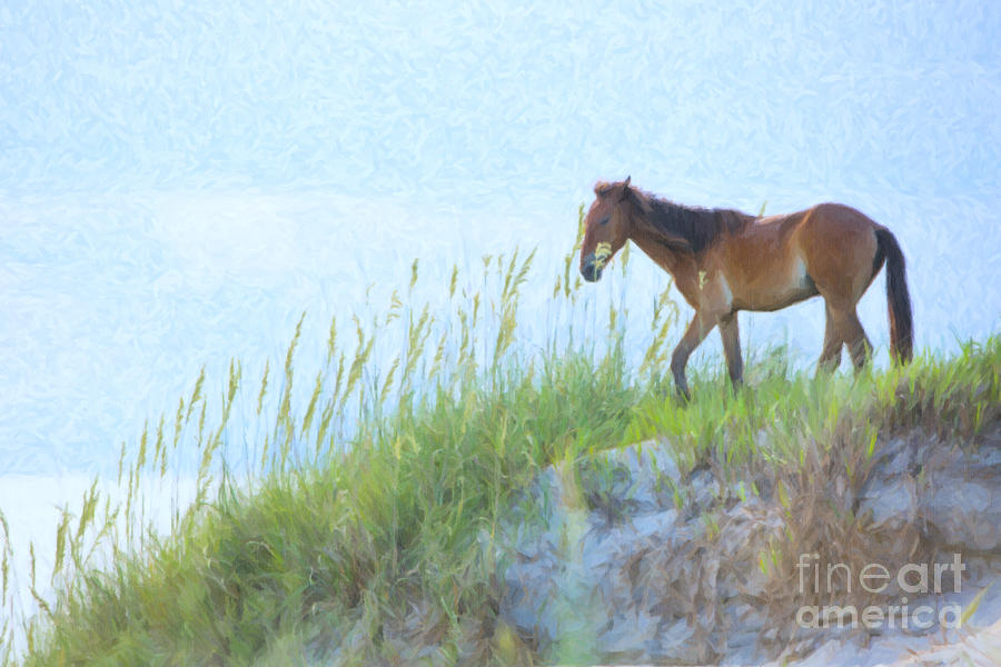 Wild Horse On The Outer Banks Photograph