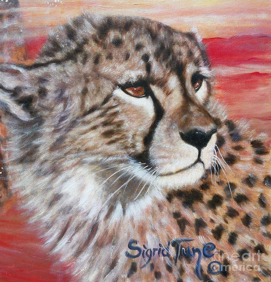 309b Cheetahs Face by Sigrid Tune