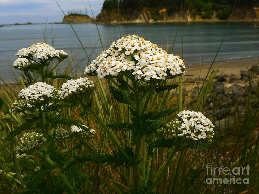 Sunset Bay State Park Photograph