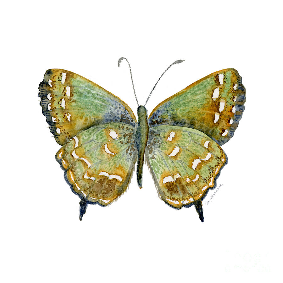 38 Hesseli Butterfly Painting