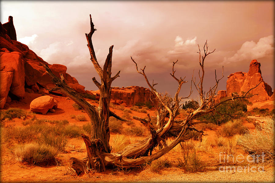 Arches National Park Photograph  - Arches National Park Fine Art Print