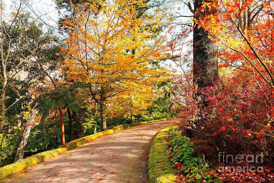 Autumn Colors Photograph  - Autumn Colors Fine Art Print