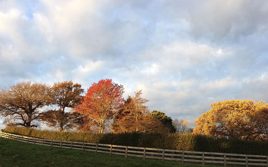 Autumn Photograph - Autumn by Les Cunliffe