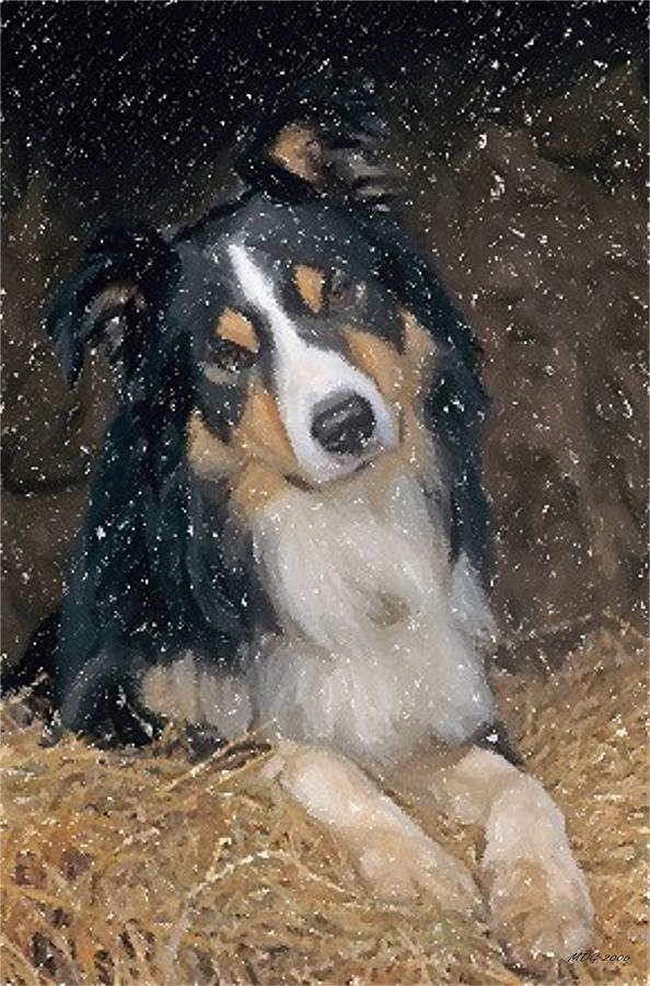 Border Collie Dog Portrait Photograph