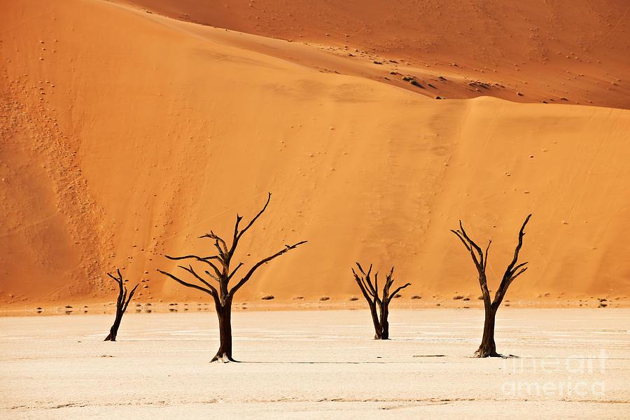 Dead Vlei In Namib Desert Photograph