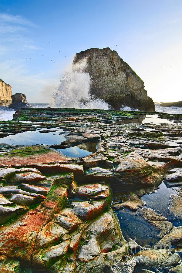 Dramatic View Of Shark Fin Cove In Santa Cruz California. Photograph