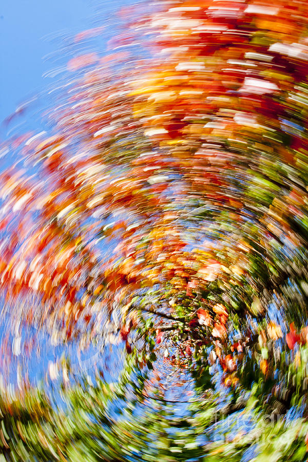 Fall Abstract Photograph