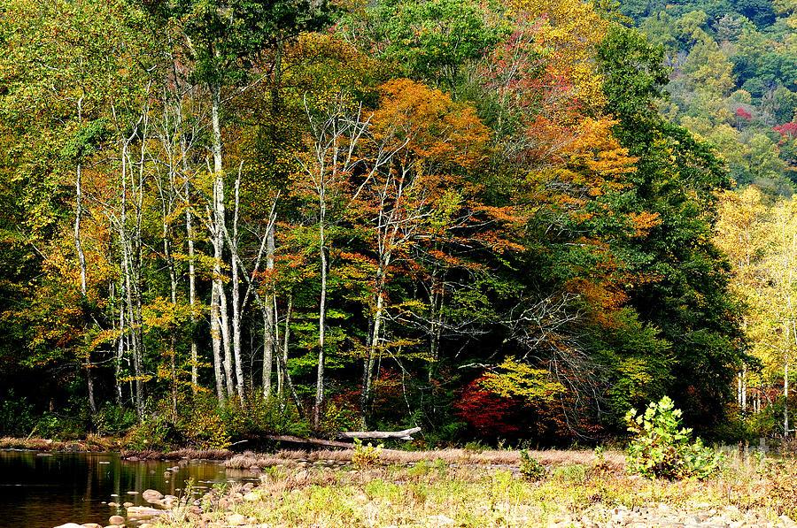 Fall Color Williams River Photograph