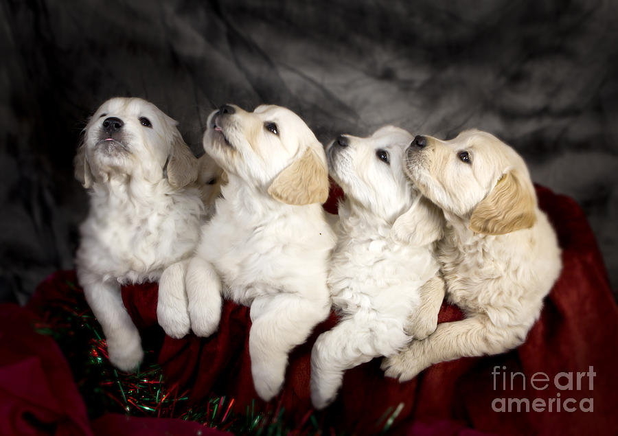 Festive Puppies Photograph  - Festive Puppies Fine Art Print