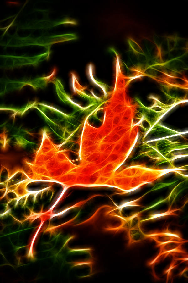Fractal Photograph - Fractal Maple Leaf by Andre Faubert