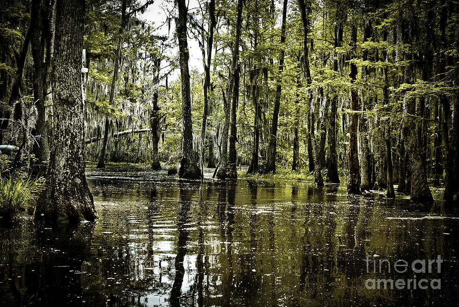 Louisiana Bayou is a photograph by Dan Yeger which was uploaded on May ...