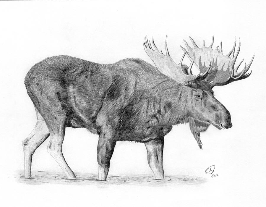 How to draw a moose head