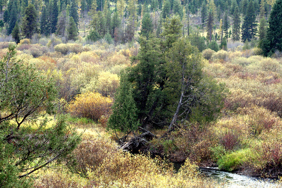 This Photo Was Taken Near Seeley Lake In Montana In The Fall Photograph - Seeley Lake In Montana by Larry Stolle