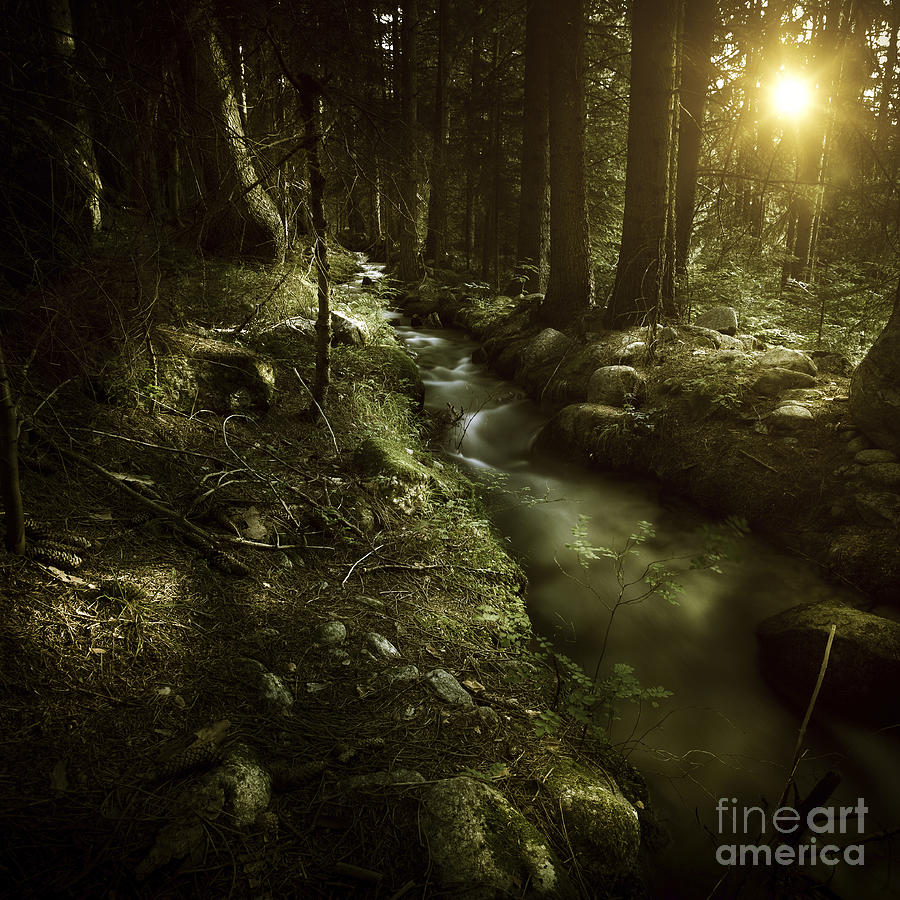 Small Stream In A Forest At Sunset Photograph  - Small Stream In A Forest At Sunset Fine Art Print
