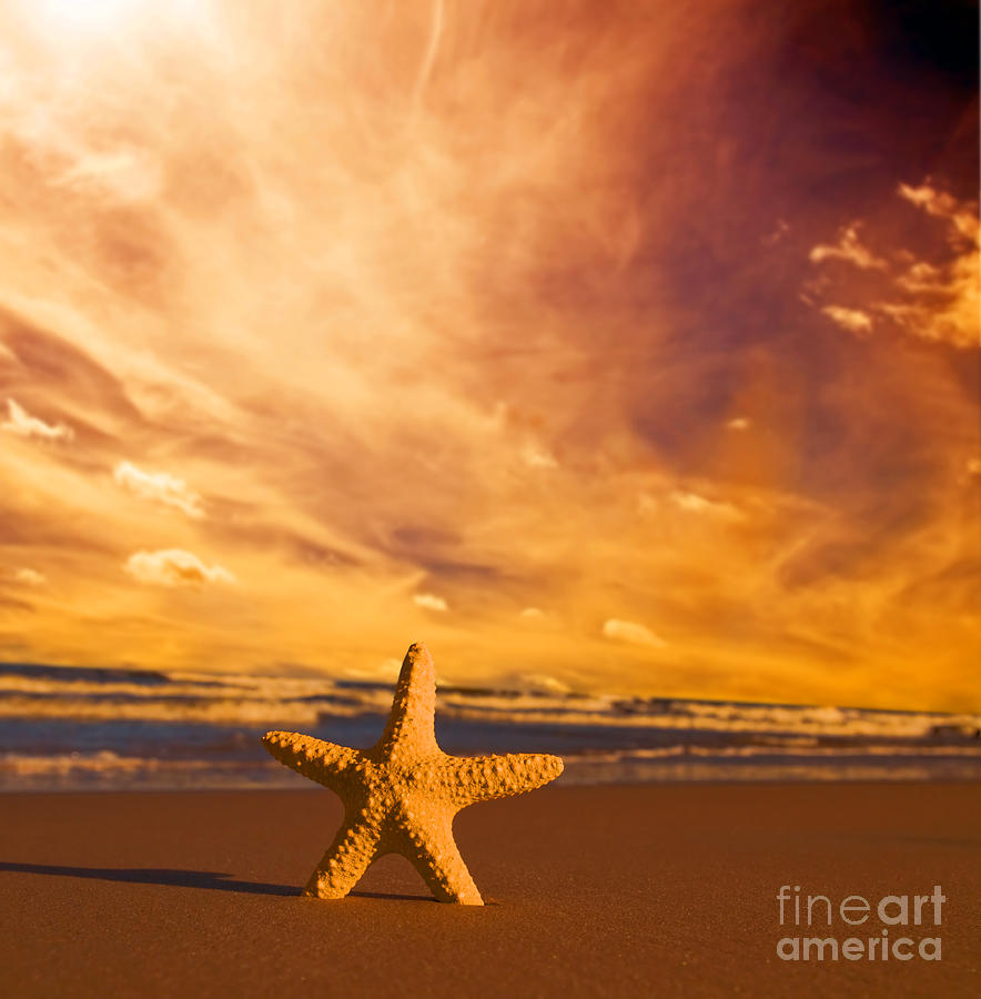 Summer Photograph - Starfish On The Beach At Sunset by Michal Bednarek