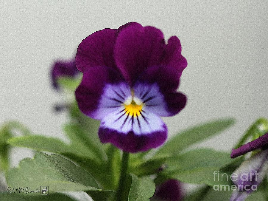 Viola Named Sorbet Plum Velvet Jump-up Painting  - Viola Named Sorbet Plum Velvet Jump-up Fine Art Print