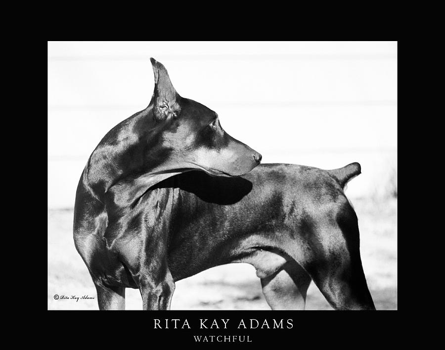 Doberman Photograph - Watchful by Rita Kay Adams