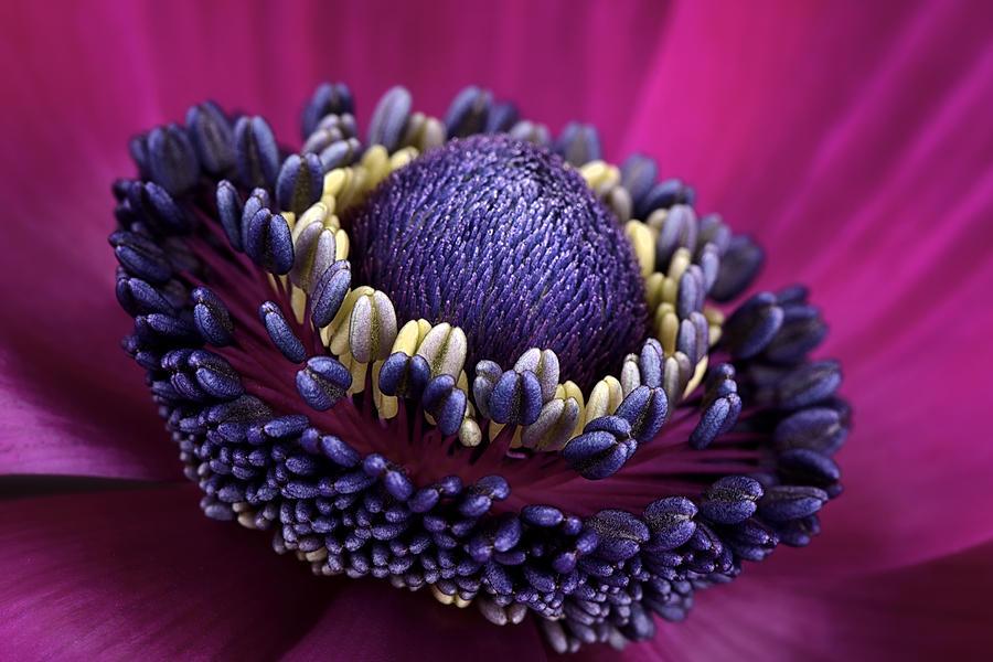 Anemone Photograph - Anemone by Mark Johnson