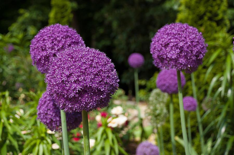 Duke Gardens Photograph