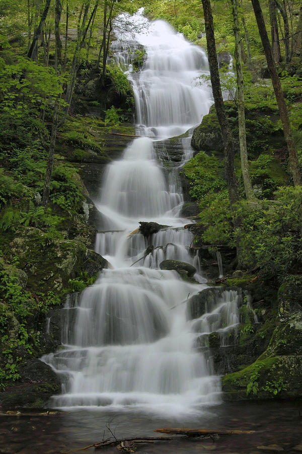 Forest Waterfall Photograph
