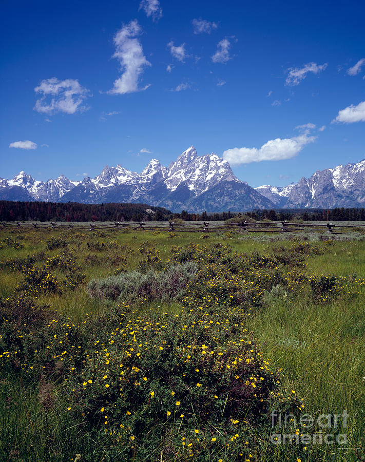 Grand Teton Photograph - Grand Teton National Park by Rafael Macia