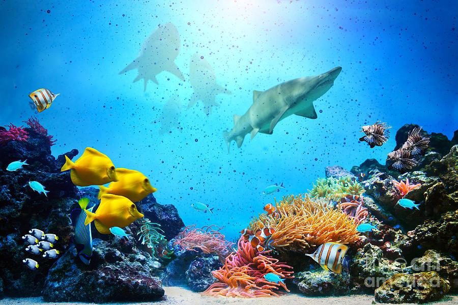 Underwater Phot... Underwater Fish Scene