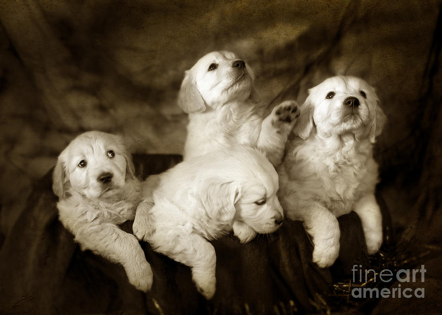Vintage Festive Puppies Photograph