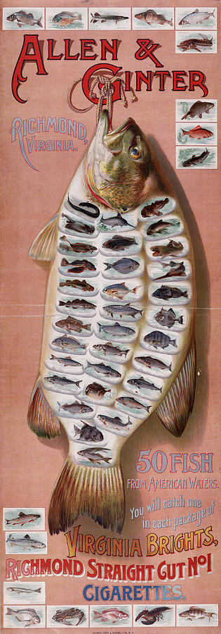 50 Fish From American Waters Digital Art  - 50 Fish From American Waters Fine Art Print