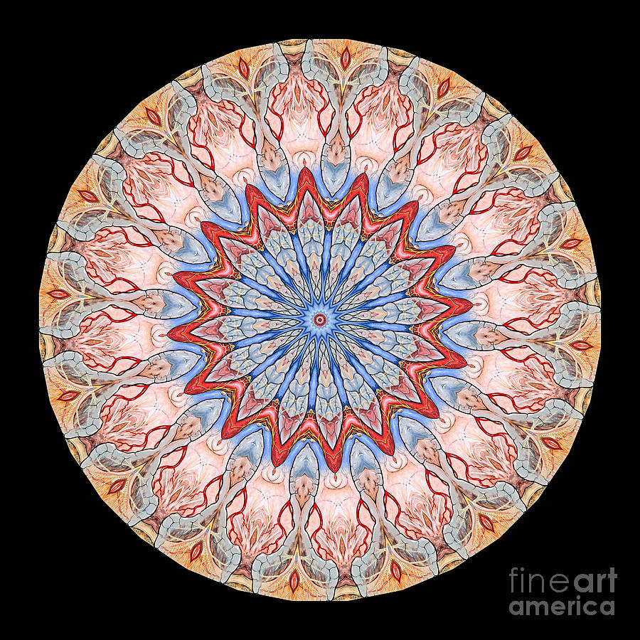 Kaleidoscope Anatomical Illustrations Seriesi Photograph