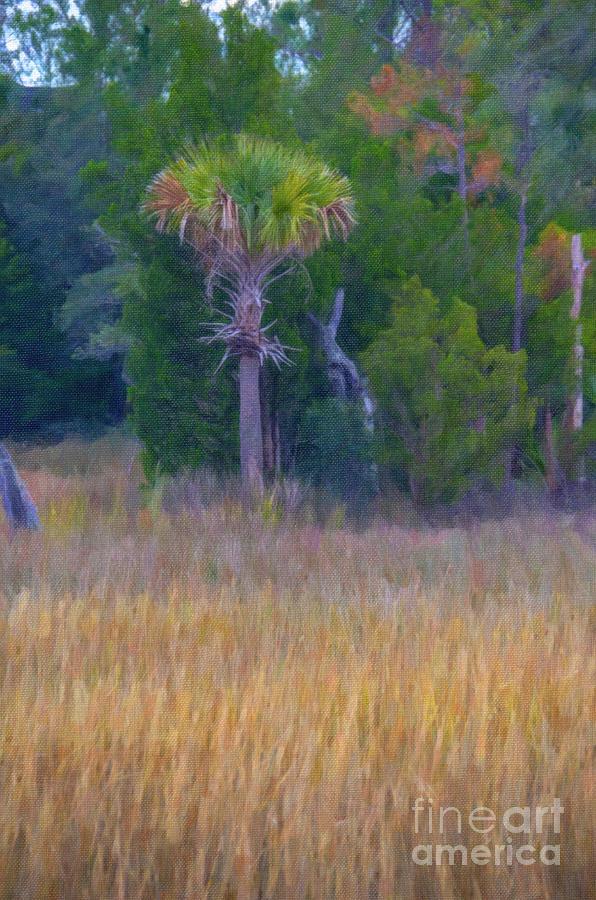 Lowcountry Marsh Digital Art