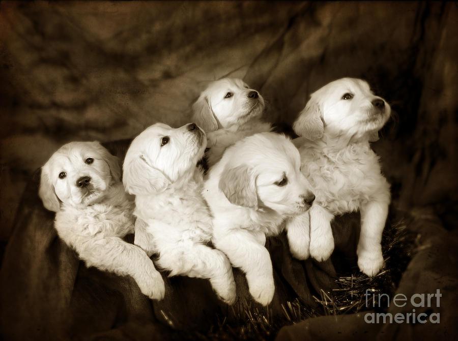Vintage Festive Puppies Photograph