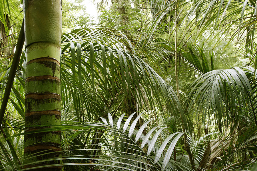 New Zealand Photograph - Jungle by Les Cunliffe
