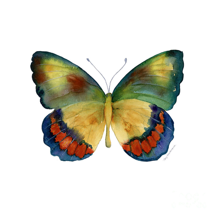 Bagoe Butterfly Painting - 67 Bagoe Butterfly by Amy Kirkpatrick