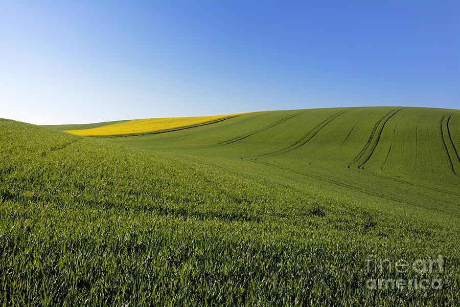 Agricultural Landscape. Auvergne. France. Photograph