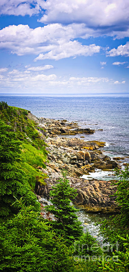 Coast Photograph - Atlantic Coast In Newfoundland by Elena Elisseeva
