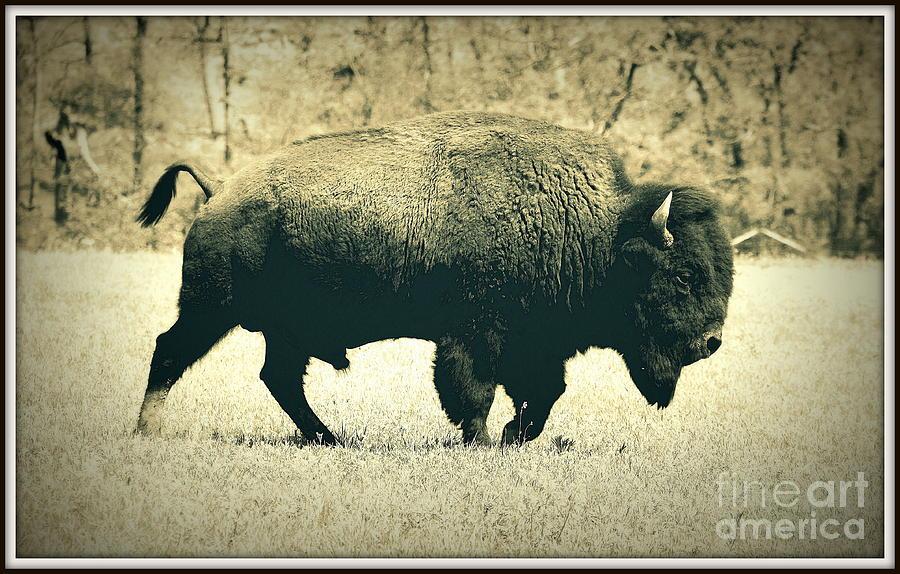 Landscape Photograph - Buffalo  by Mickey Harkins