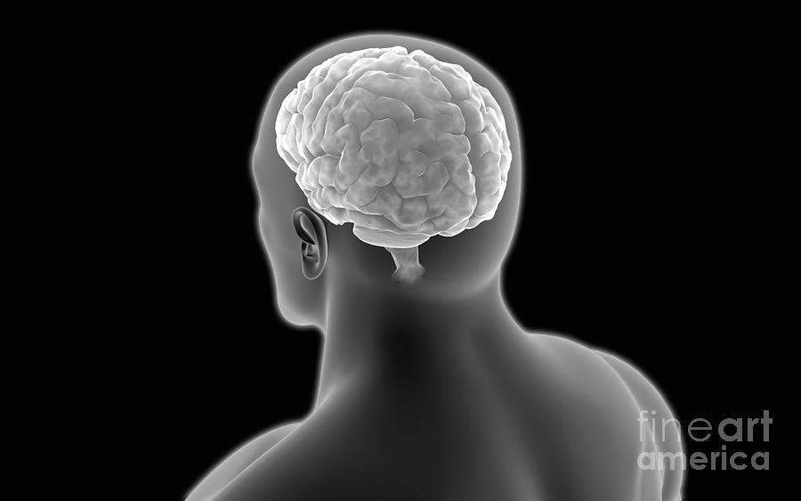 Conceptual Image Of Human Brain Digital Art
